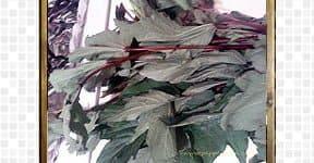 gonkura-pachadi-chutney- (4)