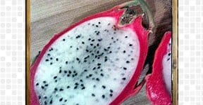 Dragon Fruit, steps and procedures
